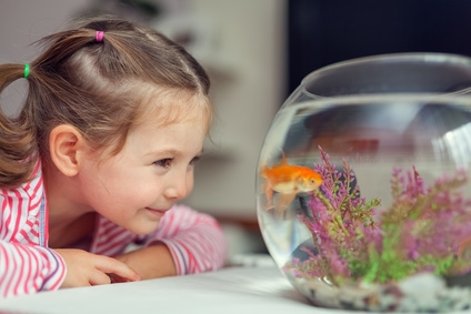 4 Reasons Why Fish Are Great First Pets For Kids